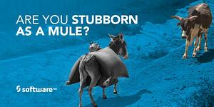 SAG_Twitter_MEME_Stubborn_Mule