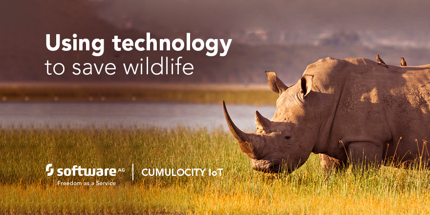How IoT Helps with Wildlife Conservation