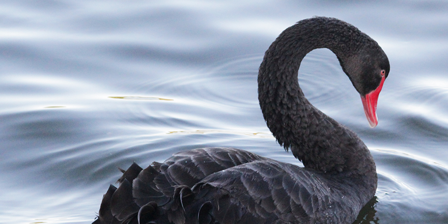 Energy: The year of the black swans